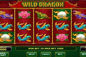 wild-dragon-img