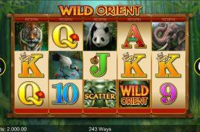 wild-orient-img