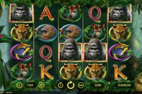 gorilla-kingdom-img